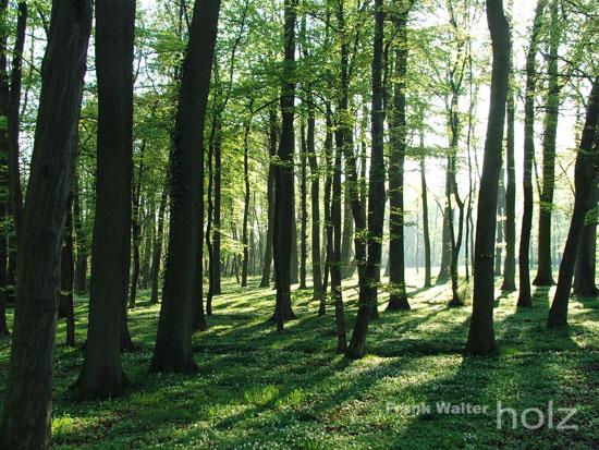 Frank Walter - Holz; Wald