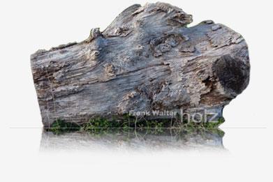 Frank Walter - Holz; alter Baumstamm